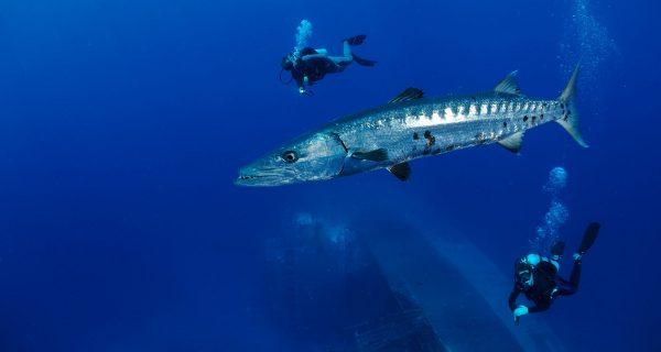 Statia-Diving-RonOffermans-0005