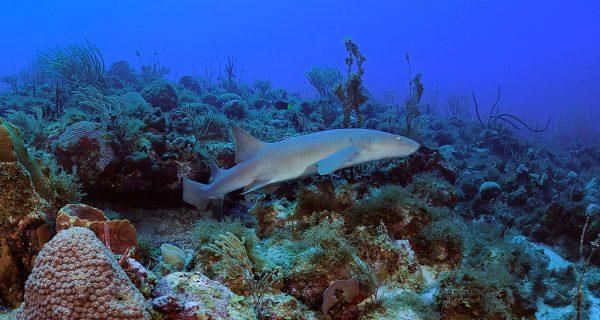 Statia-Diving-RonOffermans-0007