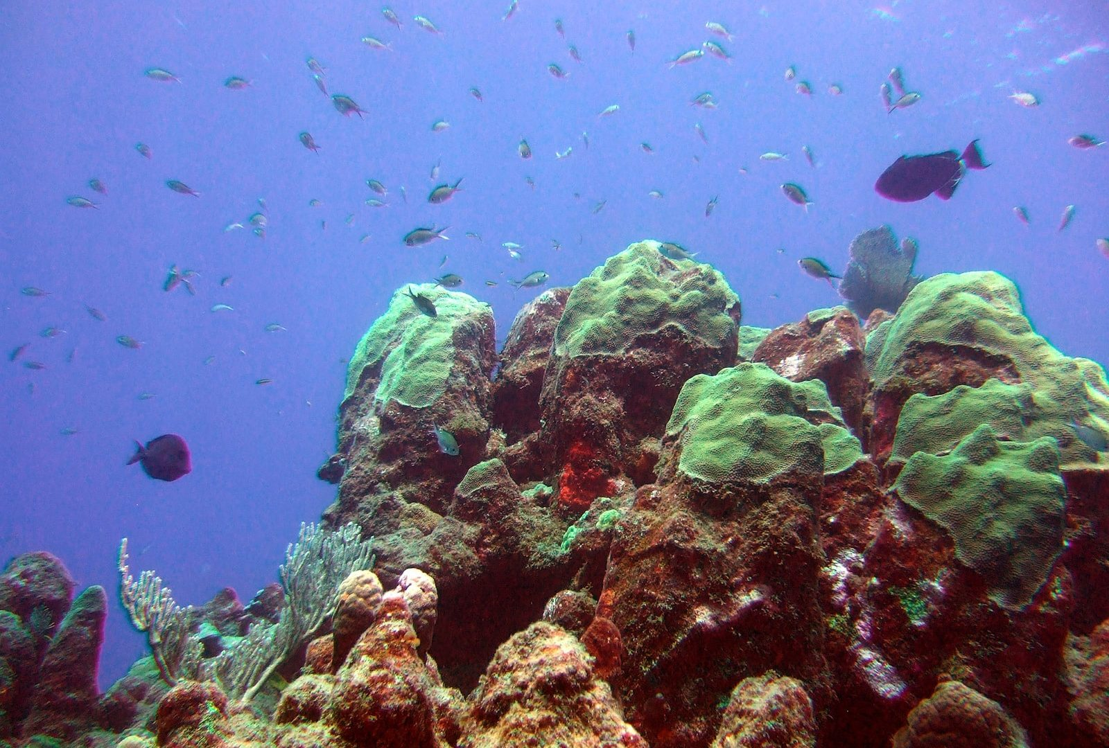 Rinsing protocol for dive gear used at dive sites with diseased corals