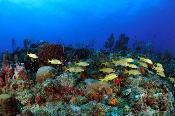 Diving-banner