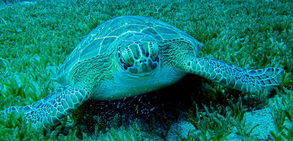 Sea Turtle Conservation Program on St. Eustatius